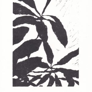 Schefflera Shadow linoprint – Black + White